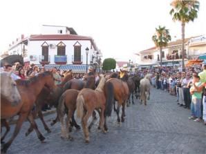 Saca-delas-Yeguas-a-su-paso-por-calles-de-Almonte