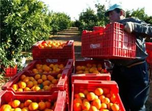 citricos-trabajadores