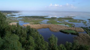 Medio-Ambiente-Hidrologico-Guadalquivir-Donana_TINIMA20131024_0370_5