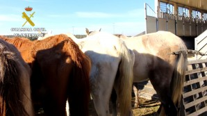 Maltrato_Animal_Huelva_Editada.Imagen fija001