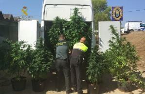 20180926_marihuana _Valverde del Camino_PL y GC