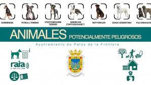 foto 2 ANIMALES POTENCIALMENTE PELIGROSOS