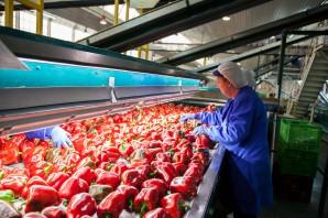 pimientos rojos agricultura